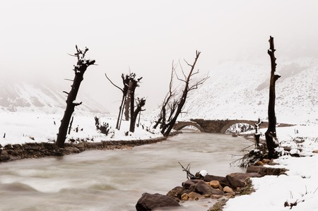 Dead trees covered with snow, located in the dry bed of the Luna reservoir, in León, Spain. Between them passes a mountain stream of gelid waters. in the background, there is an old stone bridge