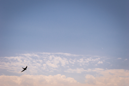 A swallow silhouette on the blue sky background. Stockfoto
