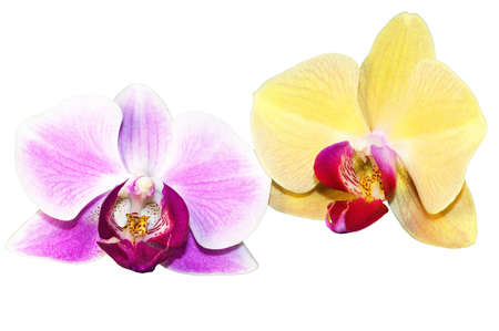 Purple and yellow orchid flowers  photo