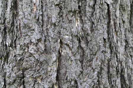 larch tree bark textural background