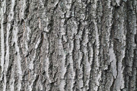 oak tree bark textural background