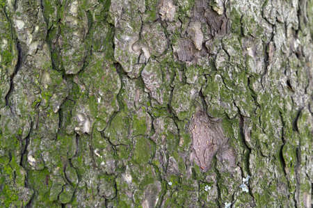 pine tree bark textural background Stock Photo