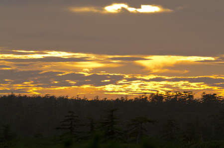 sunset in the forest-tundra landscape