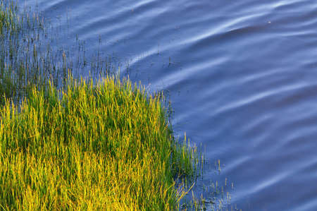 sakhalin: green horsetail on the river bank  Stock Photo