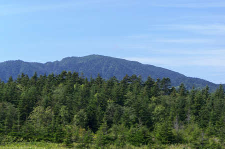 Mountains are visible behind the forest