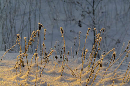 Frozen grass covered by ice.