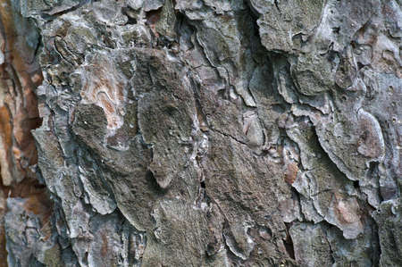 Pine Tree Bark Textural Background