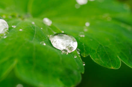 Dew droplet on green leaves  photo