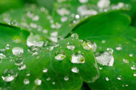 Dew droplets on green leaves.