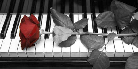 The rose lying on the keyboard of a grand piano