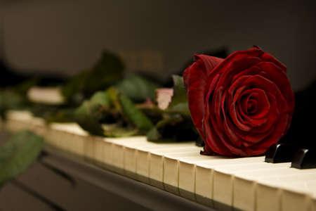 klavier: Die rose liegend auf der Tastatur des ein-Fl�gel