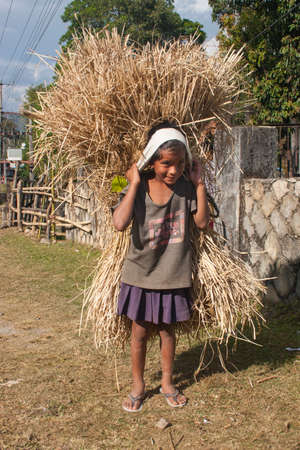 hardworker: POKHARA, NEPAL - NOVEMBER 04, 2005: Nepalese children carry hay at the traditional way.