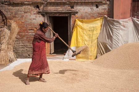 threshing: KATHMANDU, NEPAL - NOVEMBER 6, 2006: Unidentified woman threshing grain in the street in Kathmandu, Nepal. Editorial