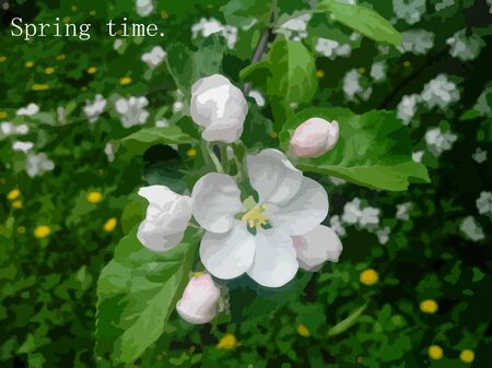 appletree: Spring background, apple-tree flowers, green grass and yellow dandelions.