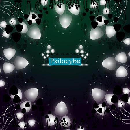 The shining hallucinogenic mushrooms of Psilocybe group.