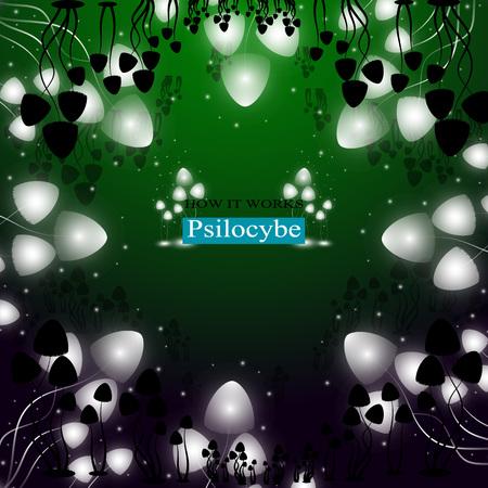 The shining hallucinogenic mushrooms of Psilocybe group.