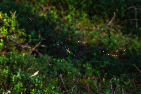 waits: Spider who waits for the victim, in a network. Stock Photo