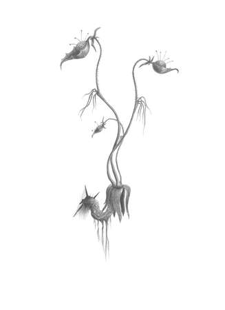 unusual flower. penciling. Stock Photo