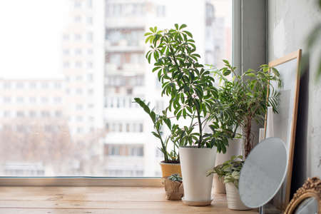 Small green potted plants on wooden window sill at home.