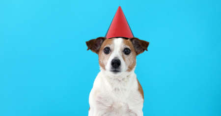 Cute dog in red party hat Designed colored circles with maker wishes happy birthday blue background studio shot Foto de archivo - 120365473