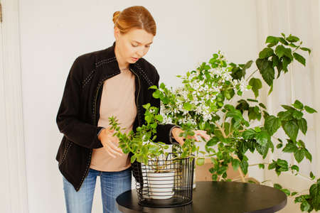 Young female in casual outfit taking care of green potted plants while standing near round table in cozy room at home