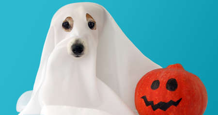 Dog sit as a ghost for halloween with pumpkin lantern scary and spooky blue background Stockfoto - 131697154