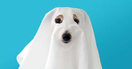 Dog sit as a ghost scary and spooky blue background Stockfoto