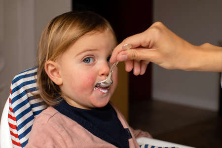 Cute toddler eating creamy food from spoon and looking at camera while being fed by anonymous parent at home