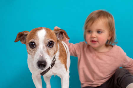 Blurred little child petting cute small dog while sitting against bright blue background Stockfoto