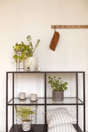 Pots with fresh flowers placed on modern shelves with pillows and cups in cozy room at home