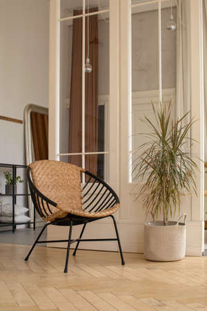 Comfortable chair and potted plant placed near partition in cozy elegant room at home Banque d'images