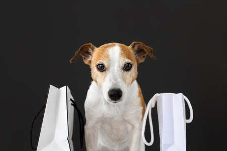 Cute dog with white paper bags with purchases on black Stockfoto - 157274172