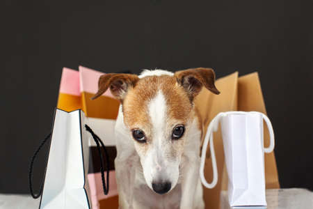 Adorable dog sitting near paper bags with merchandise after shopping against black background