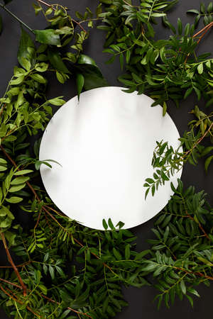 Top view composition with various fresh green foliage arranged around blank white round plate