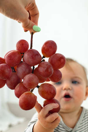 Cute baby girl are sitting with grapes white background interior. Funny child explores the fruit Stockfoto