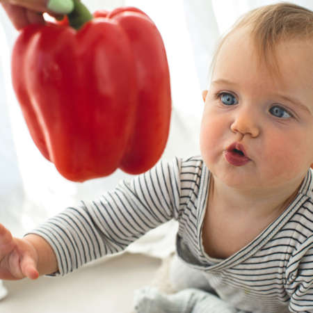 Cute baby girl are sitting with pepper white background interior. Funny child explores vegetable
