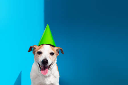 Jack Russell terrier with green party cone on blue background Stockfoto