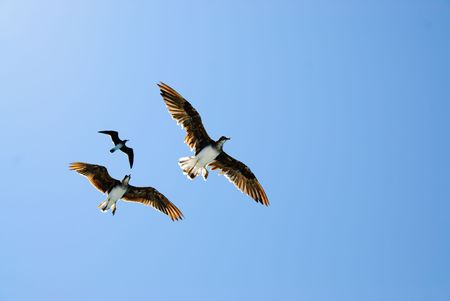 Three birds in blue sky photo