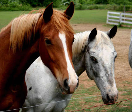 A couple of rescues horses in South Carolina Reklamní fotografie