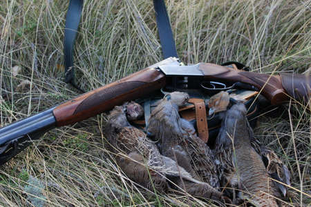 hunters: Autumn hunting trophies of partridges on the grass