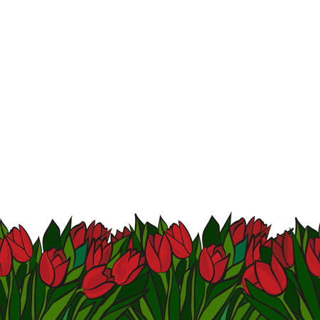 red spring tulips with green leaves on white background floral seamless bottom horizontal border Vector