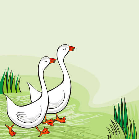 white gooses free run on sunny summer day animal farm life illustration on green background  Vector