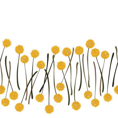 billy: messy billy balls craspedia beautiful yellow flowers on white background botanical seamless horizontal border