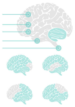 healthcare and medical: brain parts healthcare medical gray turquoise illustration on white background