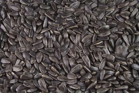 zonnebloem kiemen: Foto van zaden van een zonnebloem voor zonnebloem-zaadolie Stockfoto