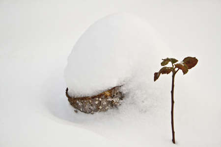 Photo of a winter sprout near the cut tree photo