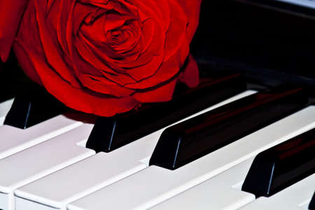 Photo of a red rose on keys grand pianos photo