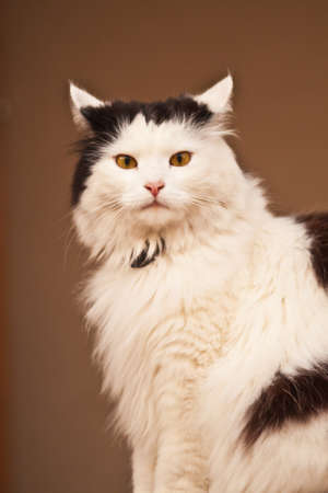 Photo of a cat in the summer afternoon Stock Photo - 14068423