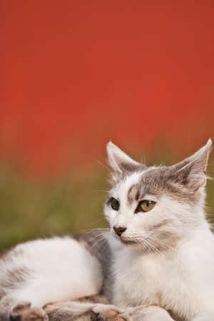 vacancier: photo d'un chat de le vacancier sur la route