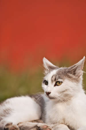 vacationer: photo of a cat of the vacationer on the road Stock Photo